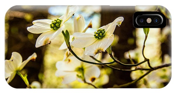 Dogwood Day Afternoon IPhone Case