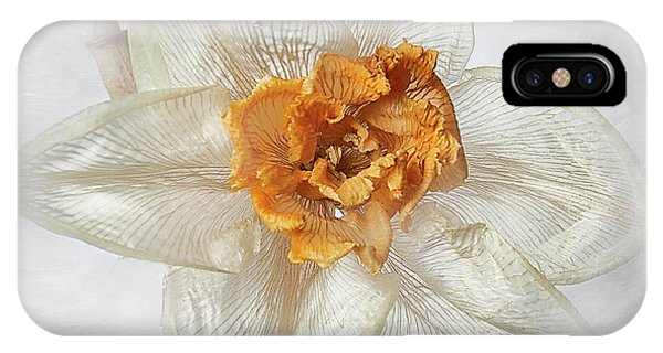 Dried Narcissus IPhone Case