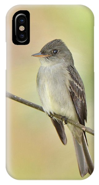 Eastern Wood-peewee IPhone Case