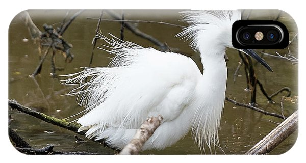 Egret Bath IPhone Case