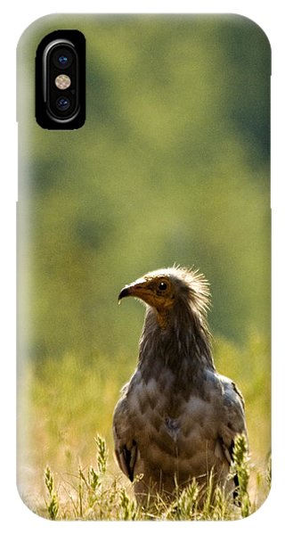 Egyptain Vulture  IPhone Case