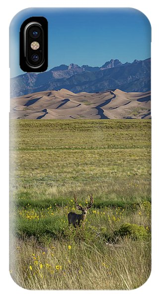 Sangre De Cristo iPhone Case - Eight Point Buck In The Grass Lands Of The Great Sand Dunes by Bridget Calip