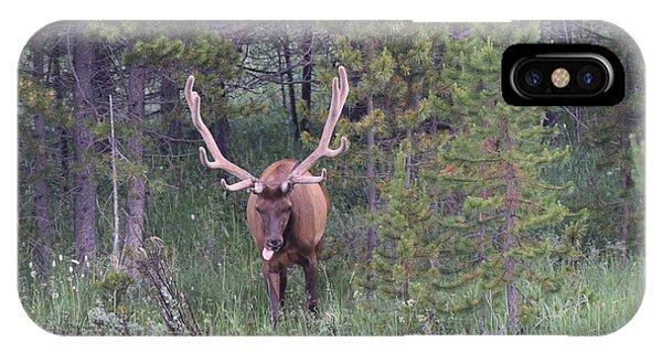 Bull Elk Rocky Mountain Np Co IPhone Case