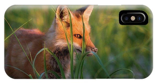 Eye Of The Fox IPhone Case