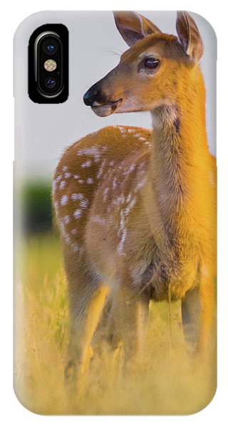 IPhone Case featuring the photograph Fawn In Sunlight by John De Bord