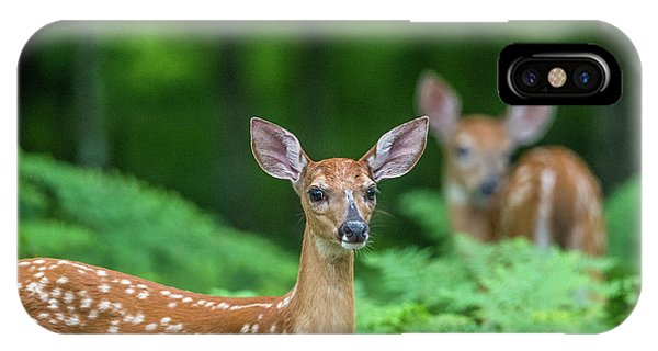 White Tailed Deer iPhone Case - Fawns by Paul Freidlund