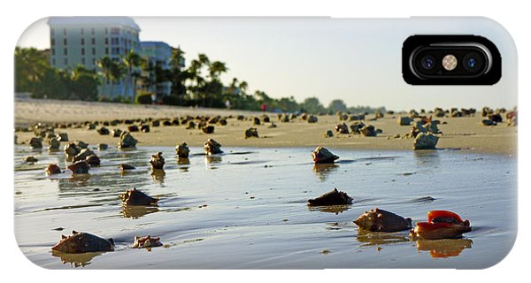 Fighting Conchs On The Beach In Naples, Fl IPhone Case
