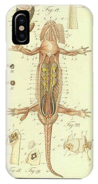 Fire Salamander Anatomy IPhone Case