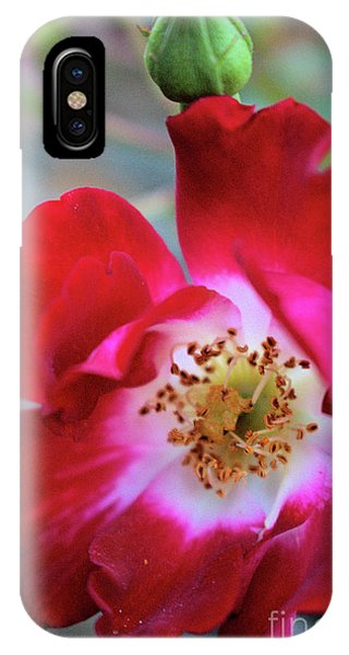 Flower Dance IPhone Case