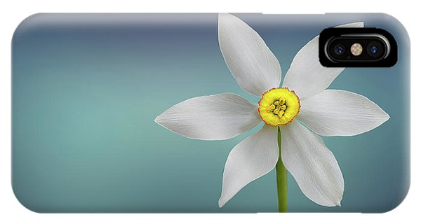 Pollination iPhone Case - Flower Paradise by Bess Hamiti