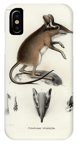 IPhone Case featuring the drawing Four-toed Elephant Shrew by J D L Franz Wagner