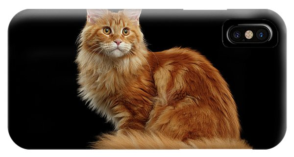 Cat iPhone X Case - Ginger Maine Coon Cat Isolated On Black Background by Sergey Taran