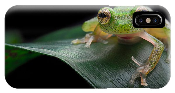 glass frog Amazon forest IPhone Case
