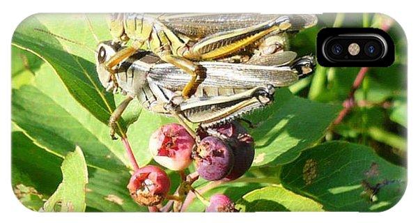 Grasshopper Love IPhone Case