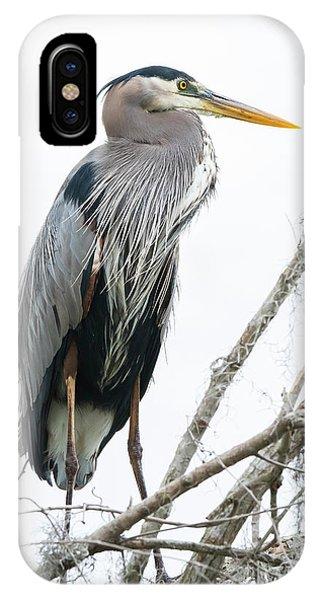 Great Blue Heron IPhone Case