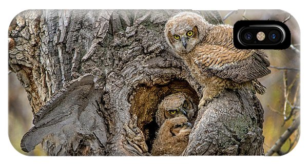 Great Horned Owlets In A Nest IPhone Case
