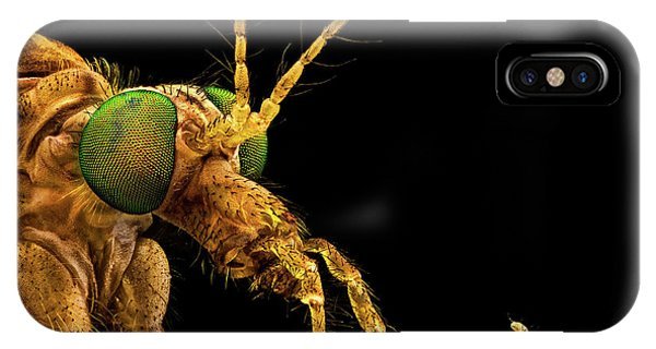 Green Eyed Crane Fly IPhone Case