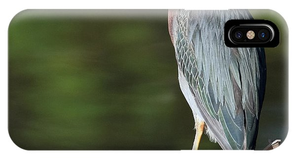 IPhone Case featuring the photograph Green Heron by Tam Ryan