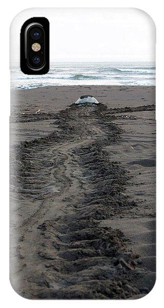 Green Sea Turtle Returning To Sea IPhone Case