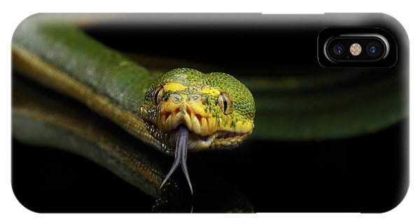 Green Tree Python. Morelia Viridis. Isolated Black Background IPhone Case