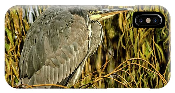IPhone Case featuring the photograph Grey Heron by Cliff Norton