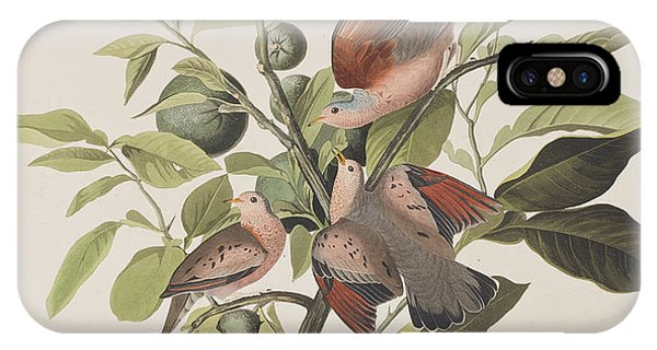 Ground Dove IPhone Case