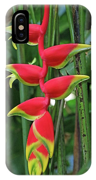 Hawaii Flora IPhone Case