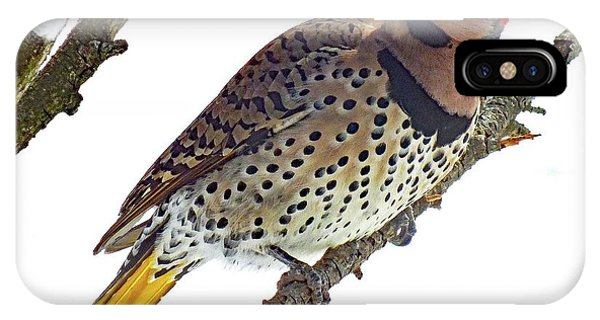 Northern Flicker iPhone Case - Hello Gorgeous Northern Flicker by Cindy Treger