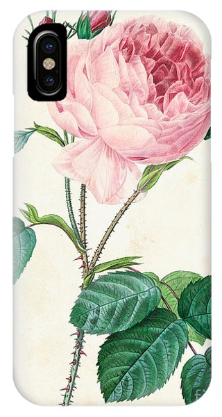 Redoute iPhone Case - Hundred Leaved Rose by Pierre Joseph Redoute
