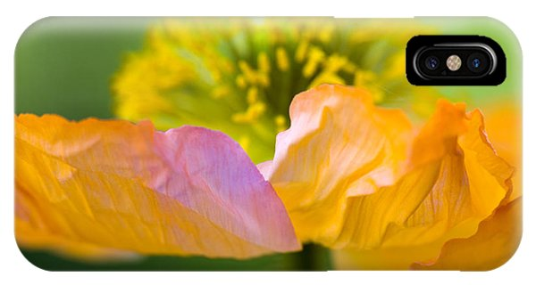 Plants iPhone Case - Iceland Poppy by Silke Magino
