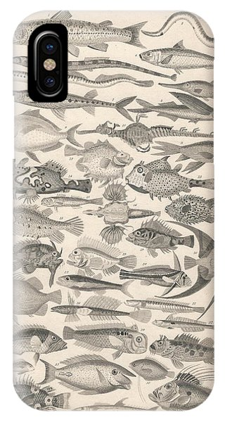 Ichthyology iPhone Case - Ichthyology by Dreyer Wildlife Print Collections