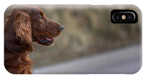 Irish Setter IPhone Case