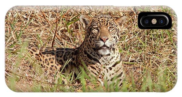 Jaguar Watching IPhone Case