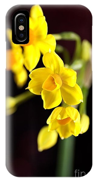 Jonquil IPhone Case