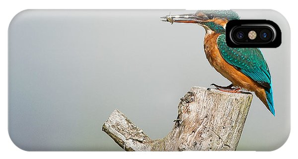 Bird iPhone Case - Kingfisher by Paul Neville