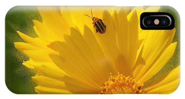 Lady Bug Lookout Phone Case by Paul Anderson