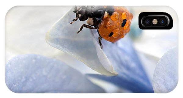 Insect iPhone Case - Ladybug by Nailia Schwarz