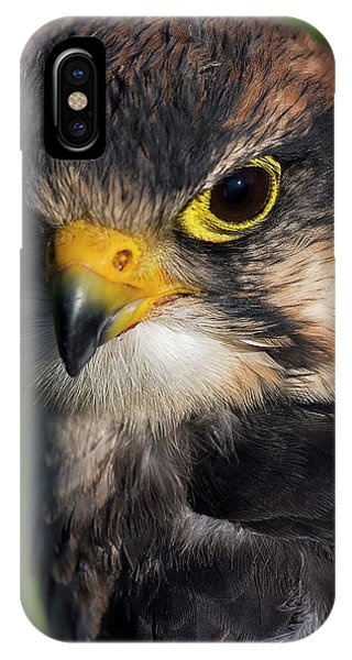 Lanner Falcon IPhone Case