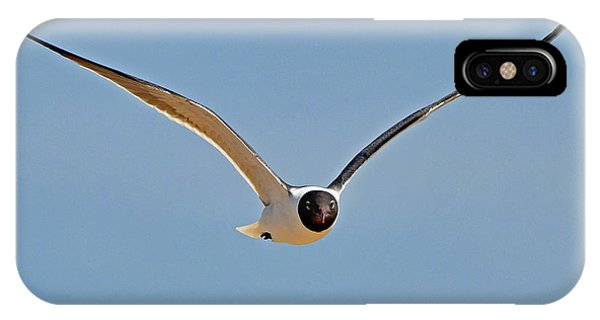 Laughing Gull IPhone Case