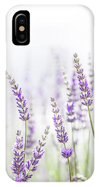Lavender Flower In The Garden,park,backyard,meadow Blossom In Th IPhone Case