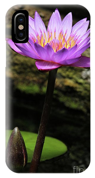 Lavender Water Lily #4 IPhone Case
