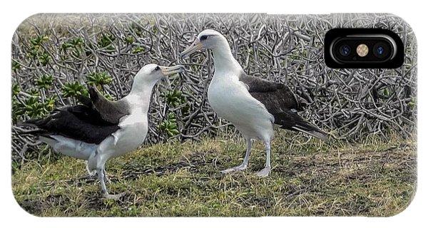 Laysan Albatross Hawaii #2 IPhone Case