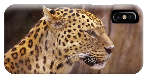 IPhone Case featuring the photograph Leopard by Donald Paczynski
