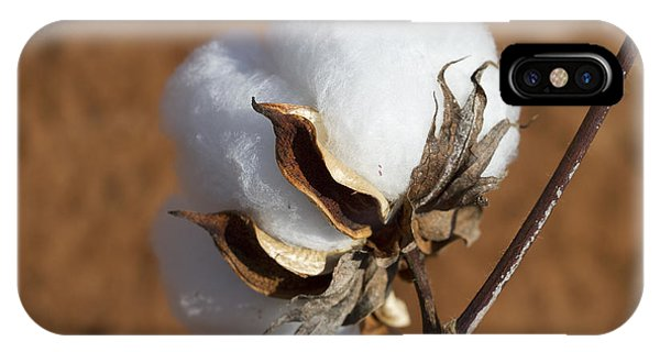 Limestone County Cotton Boll IPhone Case