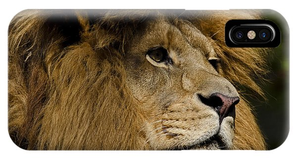 Lion Gaze IPhone Case