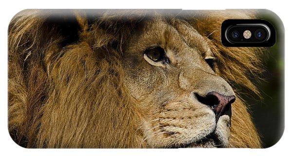 Lion Gaze IPhone Case