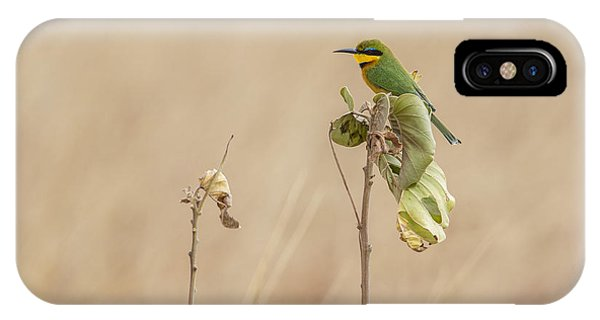 Little Bee-eater IPhone Case