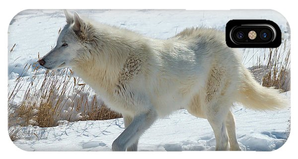 Lone White Wolf IPhone Case