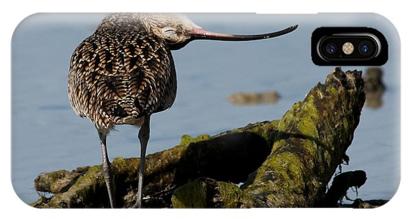 Long-billed Curlew IPhone Case