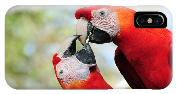 Macaws IPhone Case